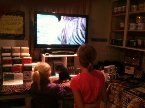 Kids waiting for Kids Tour watch videos about Big Cat Rescue