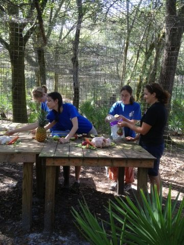 """Interns prepare Thanksgiving Day turkey feast for cougar """"cubs"""""""