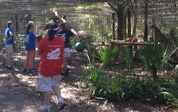 This is going to be a great video!  Watch for Big Cats vs Turkeys 2011