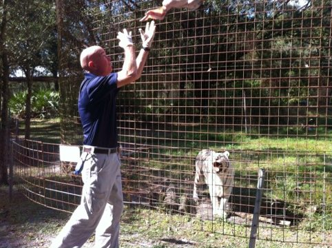 Zabu smiles for the St. Pete Times reporter as turkey flies in