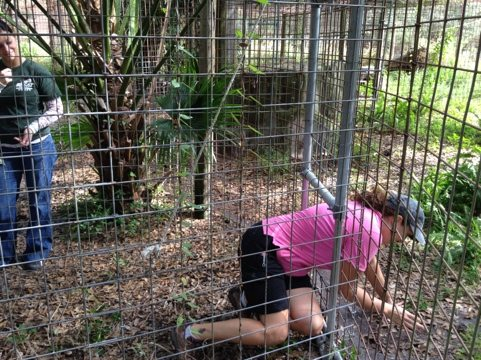 Jennifer and Jamie open up the tunnel & repair doors for bobcats