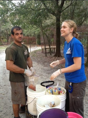 Jarred helps Katy the intern feed cats after a day of painting cages.
