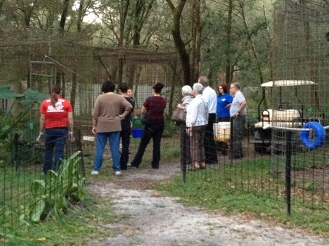 The feeding tour watches Sundari the leopard eat her meal