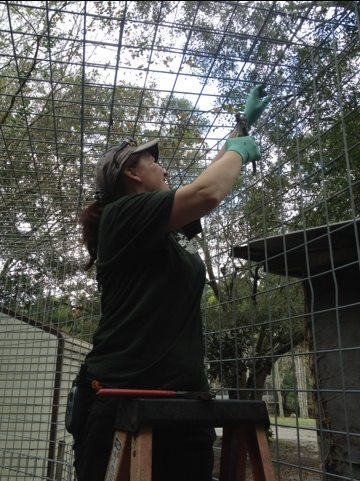 Maureen spends the after noon putting a lid on a new cage