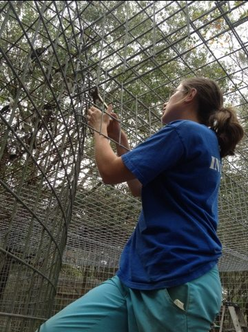 Marnell the intern has helped with lots of cages during her 3 months