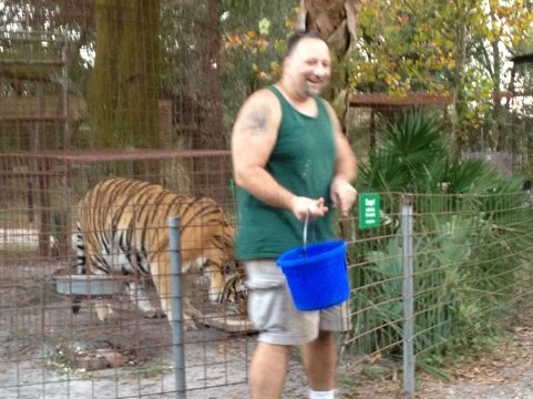 Matt helps Alex the tiger recover some of his dinner he pushed out