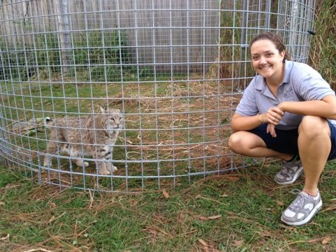 Jamie Veronica lets Windstar the bobcat into his new room addition