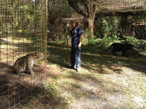 Reno the leopard follows Gale to try and get the pole away from her