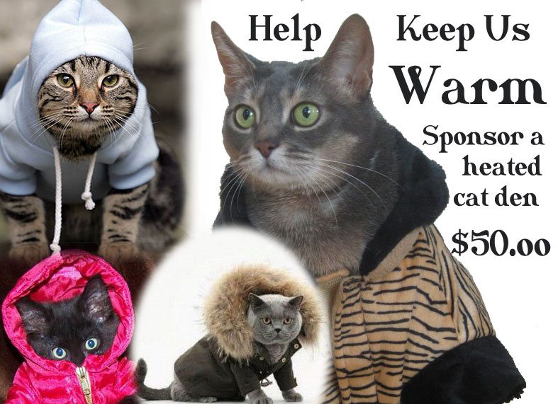 Sponsor a heated Cat Den for the Big Cats for $50