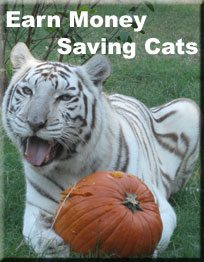 Earn Money Saving Cats