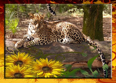 Thanksgiving Day Card with a Big Cat Rescue Leopard