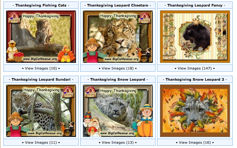 Check Out These Big Cat Thanksgiving E Cards