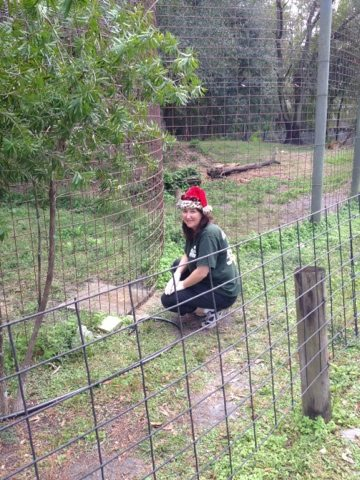 Green Shirt Maureen brings holiday cheer to captive cats