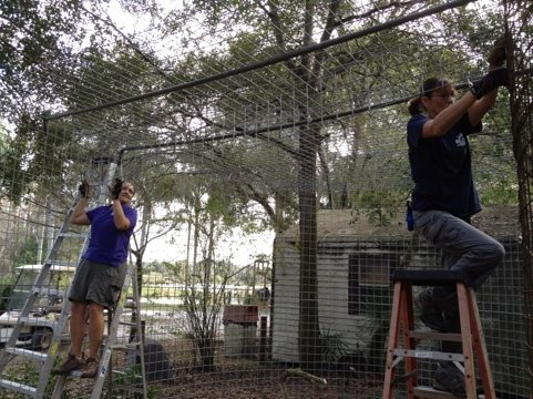 Jamie and Gale install a bridge to hold up the roof in cage addition