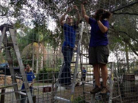 Interns are always a big part of any project going on at Big Cat Rescue