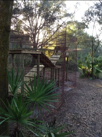Jen and Darren Holley build a jungle gym for Simba the leopard