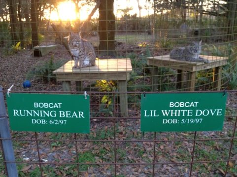 Running Bear and Little White Dove sitting behind each other's signs