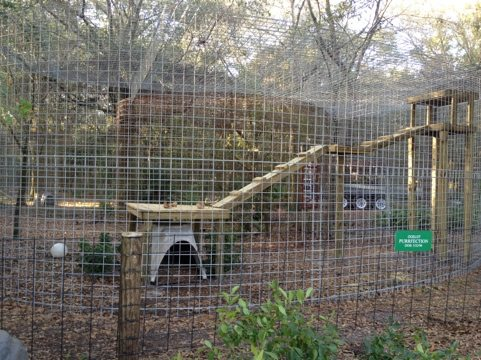 Rescuers built Purr-fection the ocelot a tree top jungle gym today