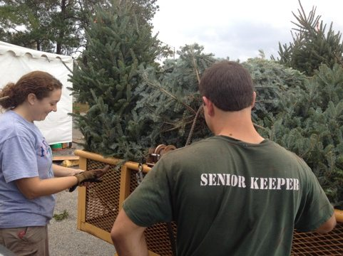 Jamie and Jarred strap on a trailer load of donated Christmas trees