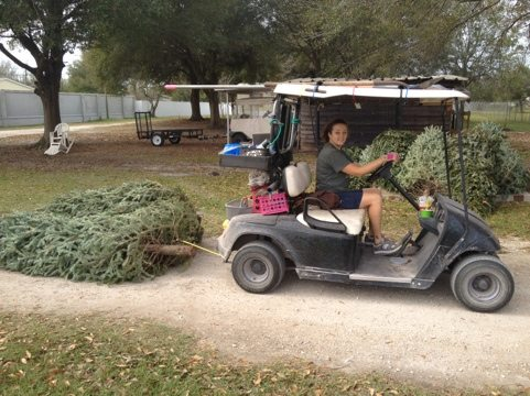 Jamie Veronica hauls Christmas trees for the cats behind her cart