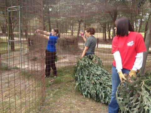 Rachel, Jamie and Afton give Christmas trees to Arthur, Andre & Amanda