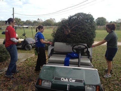 Afton and Rachel help Jamie load Christmas trees onto the carts