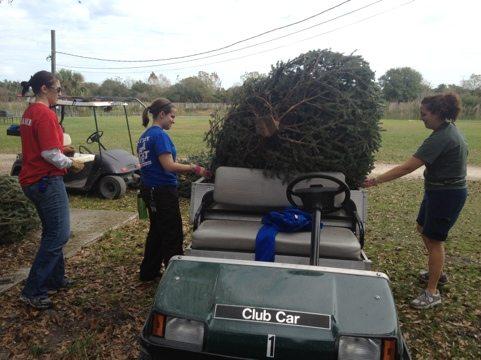Afton and Rachel help Jamie load Christmas trees onto the carts