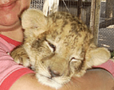 Posing with Big Cat Cubs Leads to Abuse
