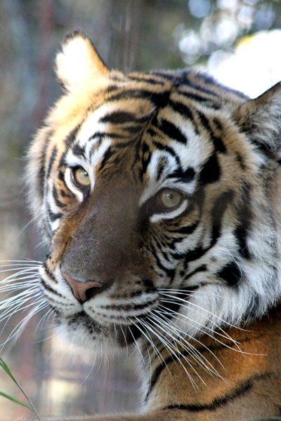 Today at Big Cat Rescue Dec 9
