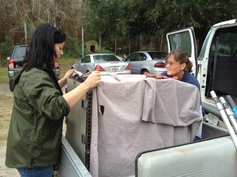 Jennifer Flatt and Gale Ingham catch the Savannah Cat and load him