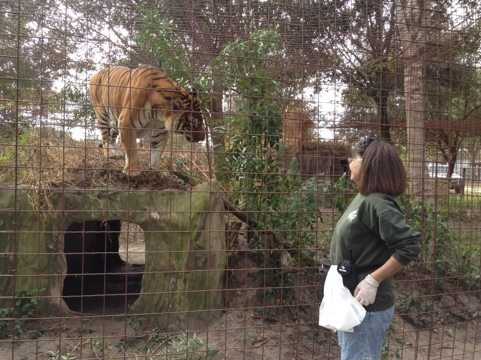 Board member and Green Level Keeper Mary Lou is wowed by Flavio tiger