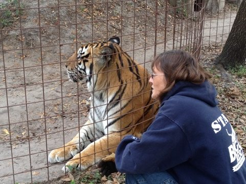 Operations Manager and tiger ask Amanda the tiger if she'll come over