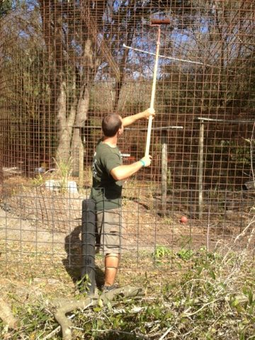 Jarred painting another lynx cage with Rustoleum to protect the wire
