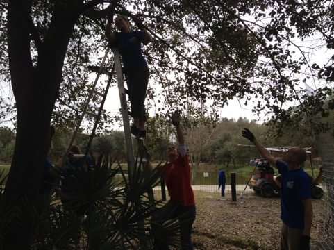 Intern Rachel cuts back some branches so we can raise cage wall
