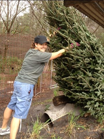 Big Cat Rescue President and Justin deliver 32 trees to cats