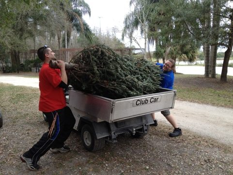 Michael and Amber take a Christmas tree in for Nirvana the Ocelot