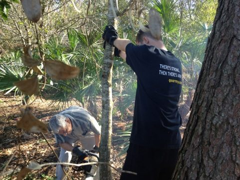 Army volunteers thin out the saplings to allow larger trees to grow