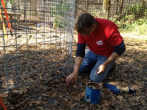 Shane putting stake wire around the bottom of the new bobcat cage