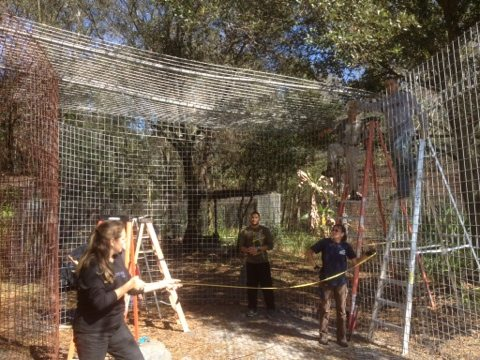 Founder Carole Baskin and Ops Mgr Gale measure cage for bracing