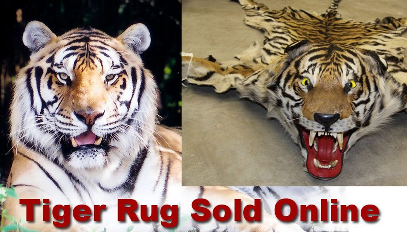 Tiger Rug Sold Illegally Online