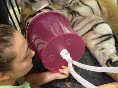 Jamie and Justin made a Shere Khan size gas mask out of a bucket and waterbed