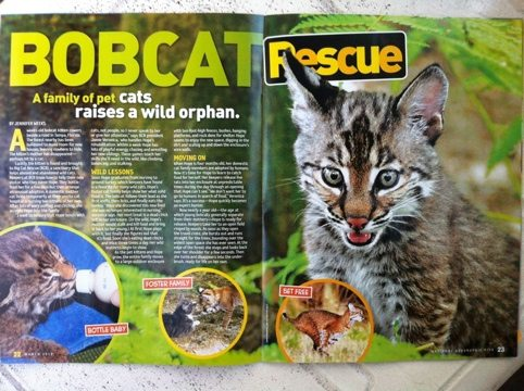 The rehab of Hope the baby bobcat inspires children world wide