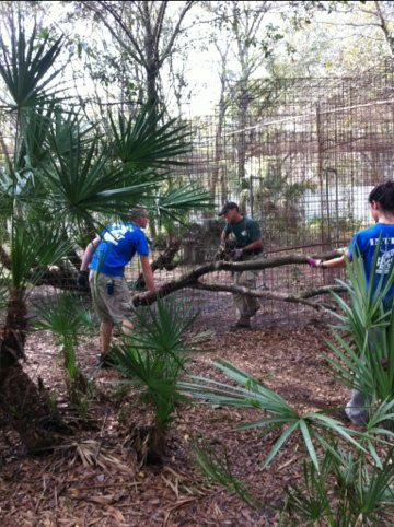 Volunteers make some improvements to Kawanah Lynx' home