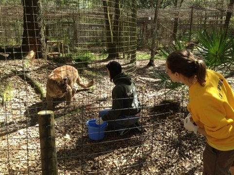 Jennifer shows Marcy Operant Conditioning w/ Sassyfrass the cougar