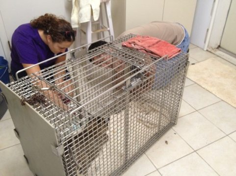 Jamie and Justin try to get a look at Bailey's condition in squeeze cage