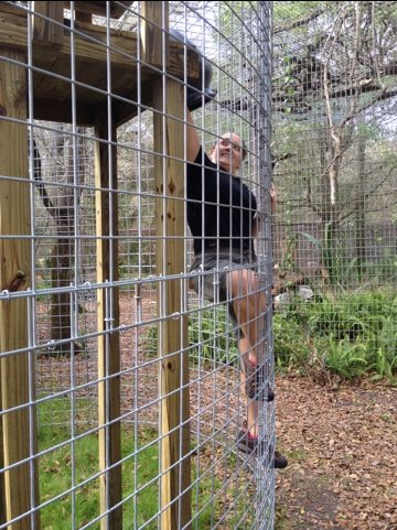 Jamie climbs wall of ocelot cage to give her a flower pot den