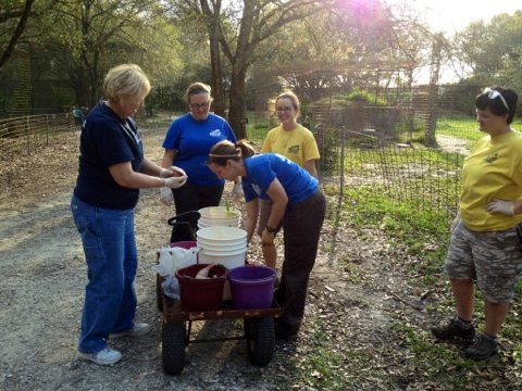 Volunteers feeding the lions, tigers, leopards, bobcats and servals