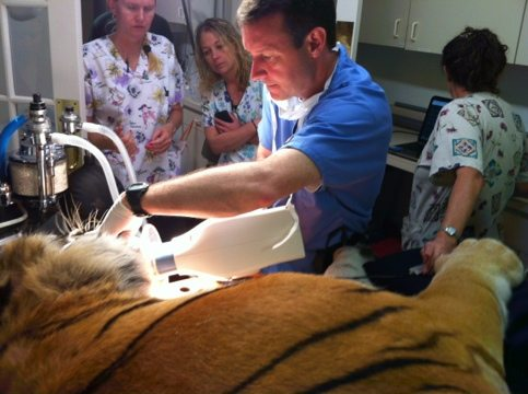Dr Peak has been a wonderful dentist to the big cats here for years