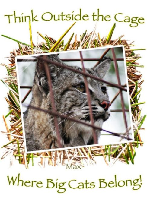Think Outside The Cage - Big Cats Belong