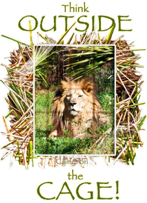 Think Outside The Cage - Lion